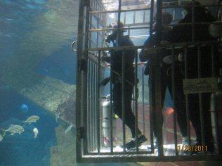 shark dive8